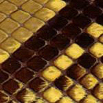 Pitone-opaco-lucido-estivo