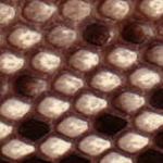 Pitone-opaco-lucido-invernale-1
